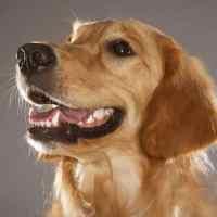 Il cane caregiver: l'amico di famiglia che ci aiuta