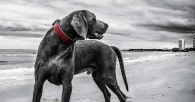 Doggy Essential: accessori per cani high-tech e senza fronzoli