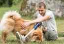 """Il """"cane speciale"""" per la socialità e la salute: cani che aiutano le Persone"""