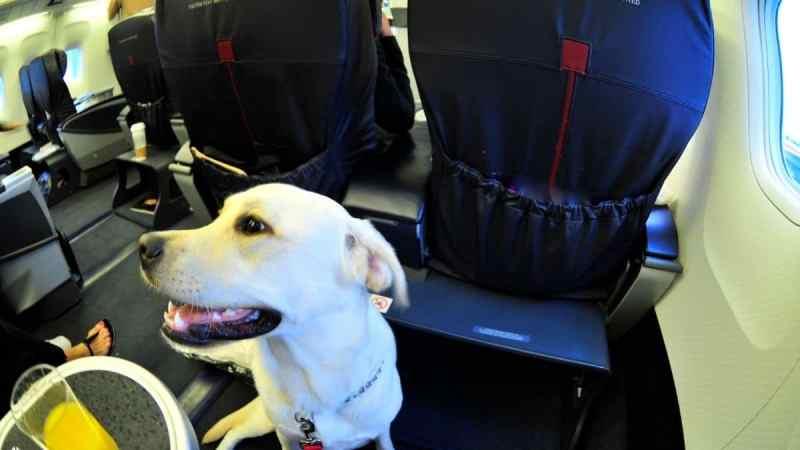 BauTour da Milano a Roma in aereo con cani in cabina di ogni taglia con visita guidata