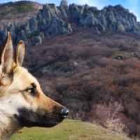 Blue Heeler: il brand cinofilo che crea guinzagli ispirati all'alpinismo