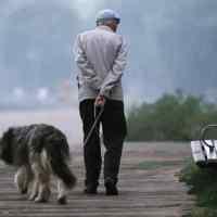 I cani e gli anziani: un binomio spesso spontaneo.