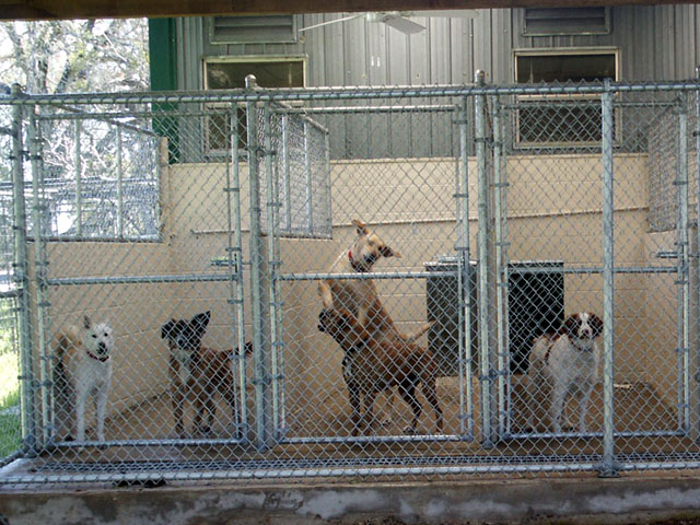 How To Start A Dog Kennel | Dogspot.in