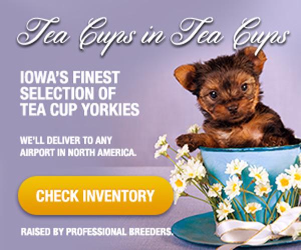 Sameday_teacup