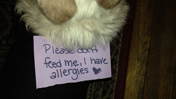 A dog paw with a sign about allergies in dogs.