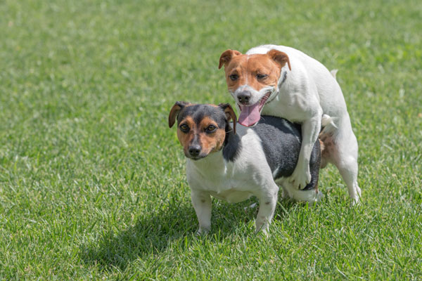Image result for humping in dogs