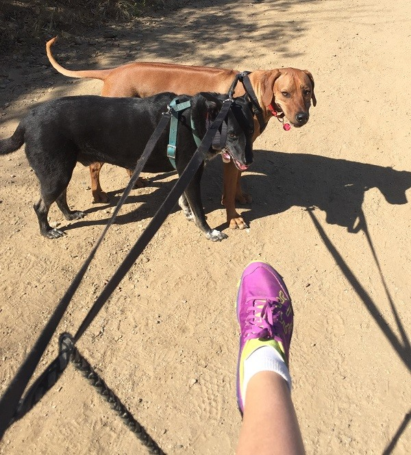 Riggins and his friend Kili want me to stop taking pictures of my feet and get going! (Photo by Wendy Newell)