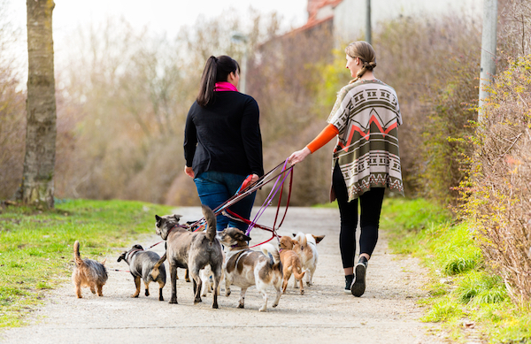 Pet sitters walking dogs by Shutterstock.