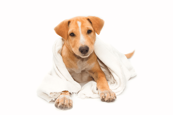 Clean dog by Shutterstock.