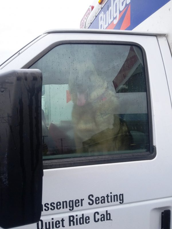 Lola and I moved a year ago to be closer to my dad. I think she wanted to drive the moving truck herself. (Photo by Kat Merrill)