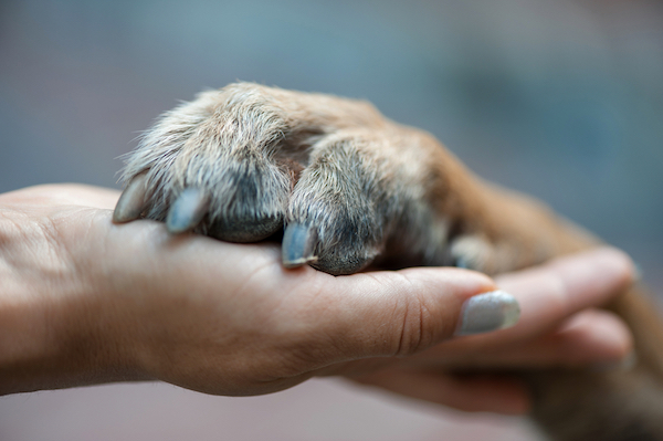 Hand and paw by Shutterstock.