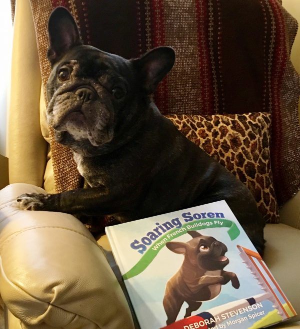 French Bulldog courtesy Deb Stevenson