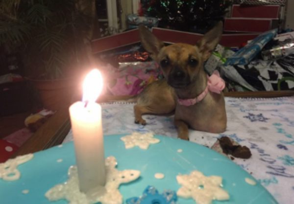 Kiki celebrated her first birthday on Christmas Eve. (Photo courtesy Brittani Lowe)