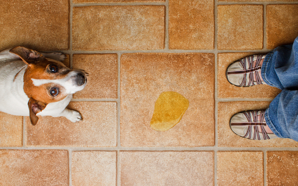 A puddle on the floor is usually not a result of marking. (Photo by Shutterstock)