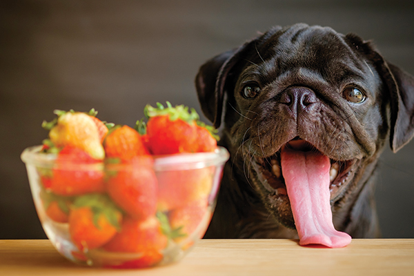 A dog with his tongue out next to a bowl of strawberries.