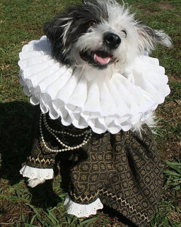 Jinx in her Queen Barklizabeth I costume. Submitted by Facebook user Miko Simons.