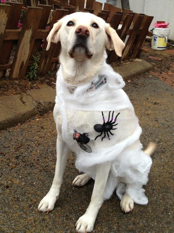 Lily in her cobweb costume. Submitted by Facebook user Trisha Lang.