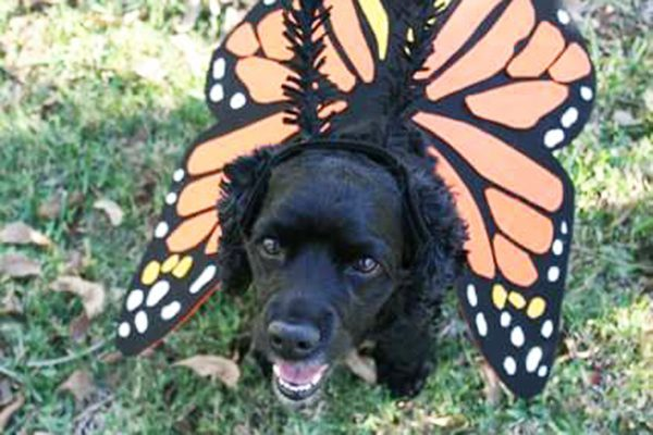 Monarch. Submitted by Facebook user Michele Flores.