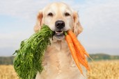 Can Dogs Eat Carrots? Are Carrots Good for Dogs?