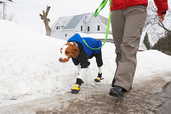 Walking a dog in snow and ice.