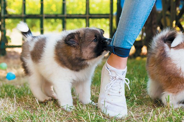 Puppies repeat behaviors that work for them. Photography ©chris-mueller   Getty Images.