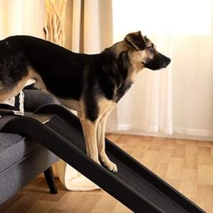 L'escalier ou la rampe pour ménager votre chien.
