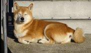 dog-3098176_1280