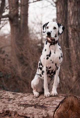 dog-3386009_1280