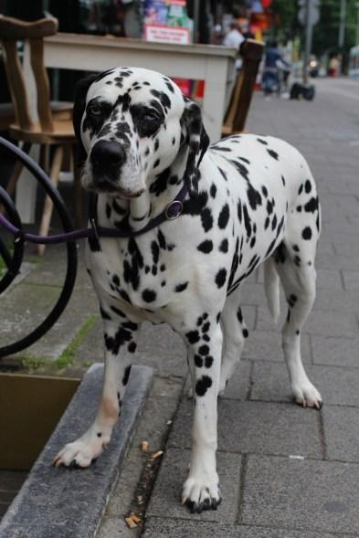 dog-637800_1280
