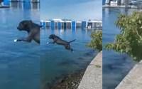 chienne plongeon dans la mer