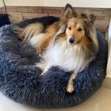 Panier Comfy Bed de chez Toutouland
