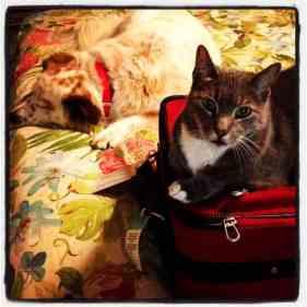 linus-suitcase