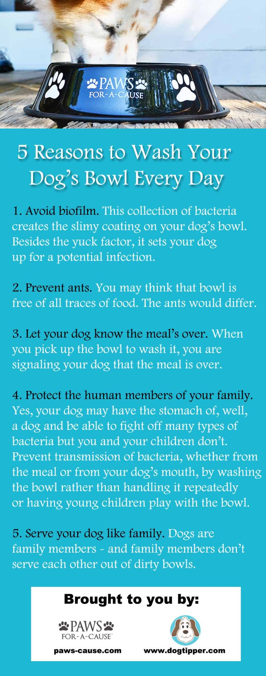 5 reasons to wash your dog's bowl every day'