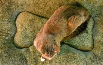 tueam-dog-bed-linus