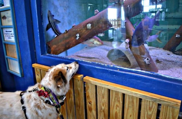dog-friendly aquarium