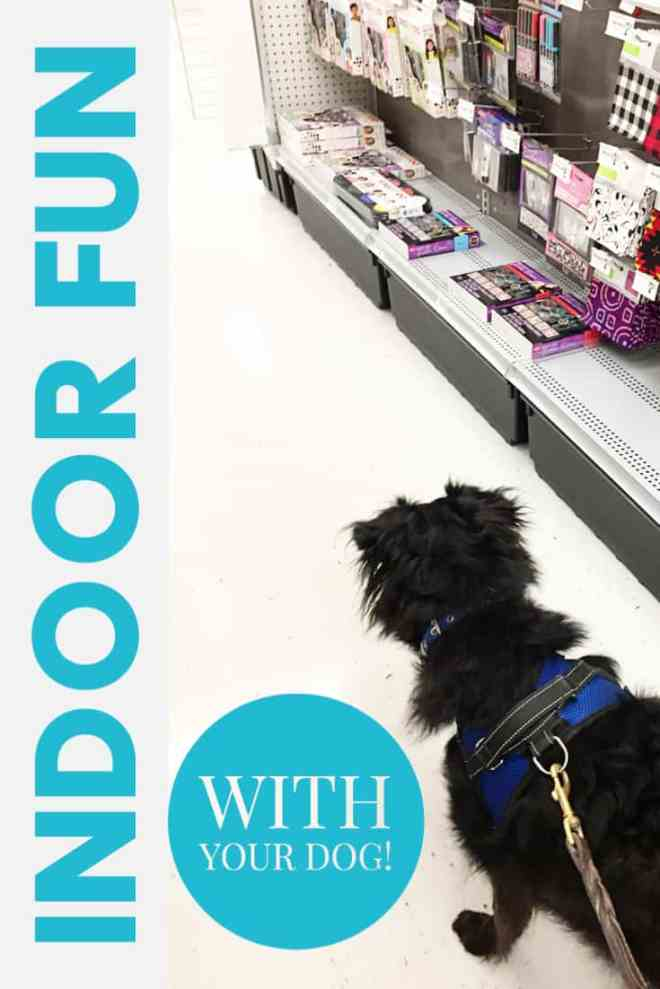 indoor fun with your dog