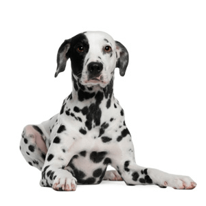 Dogtopia Alexandria homepage