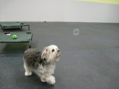 Doggy and bubble
