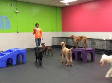 Playroom at Dogtopia