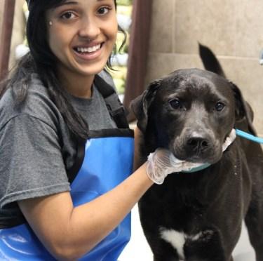 Charity dog wash