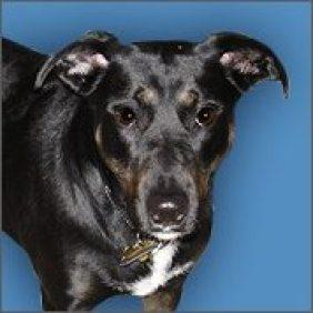 Founding Dog: Zoe