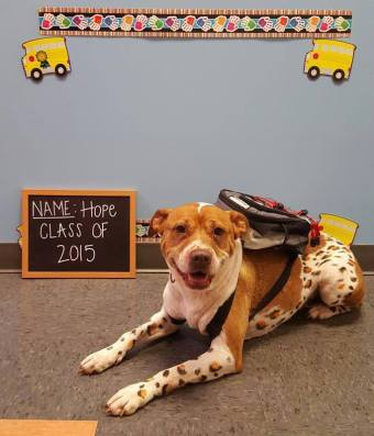Hope Pit Bull mix, Bark to School picture