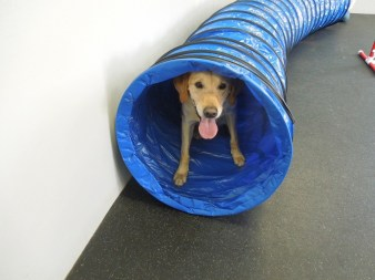Dog boarding spa daycare wilmington dogtopia elsmere kaigan kramer solutioingenieria Image collections