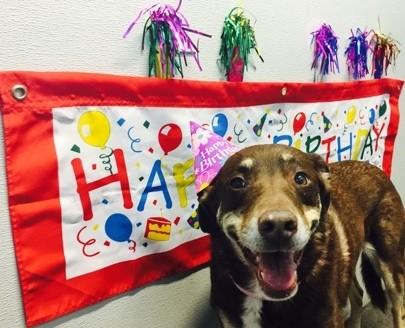 Dog birthday at Dogtopia
