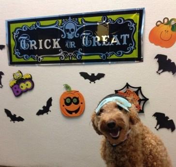 Halloween at Dogtopia