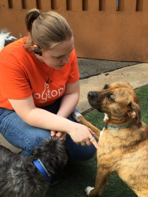 Lauren, our Shift Leader, and Tori, the Boxer mix are just having a little girl talk.