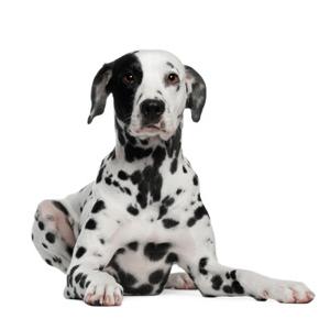dog-sit-homepage1