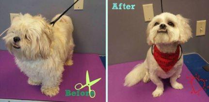 Dog grooming spa services omaha dogtopia omaha dogotpia omaha spa solutioingenieria Choice Image