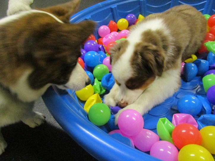 Ball Pit Day