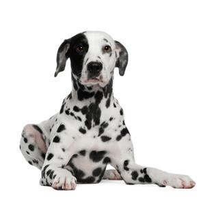 Dogtopia Wilmington homepage